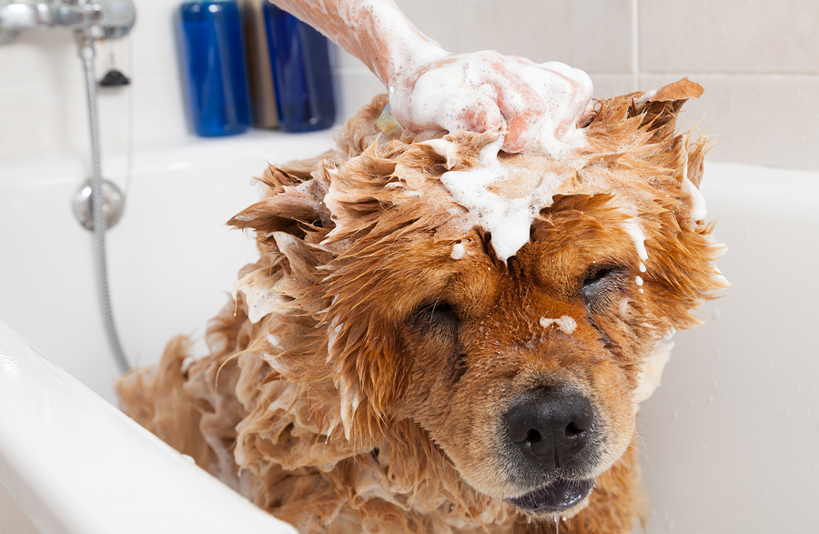 4 signs you should have your pet bathed