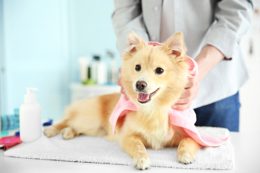 Benefits of regular grooming